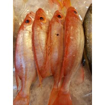 紅魚 (斤)