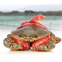 越南 肉蟹 (斤)